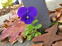 violet-at-hc-2011-10-21-nsc-iPhone4S.jpg